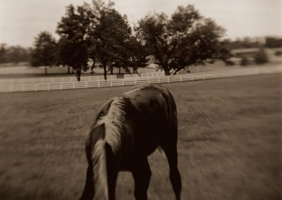 Chrystopher Robinson Photography--Horse