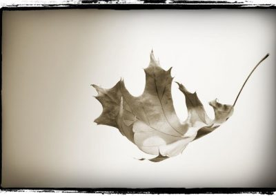 Chrystopher Robinson Photography--Chocolate leaf